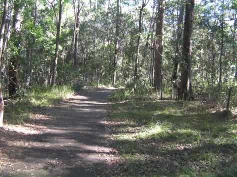 Wide, sealed paths are suitable for prams in a natural forest setting.