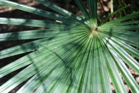 Palm groves make shady umbrellas